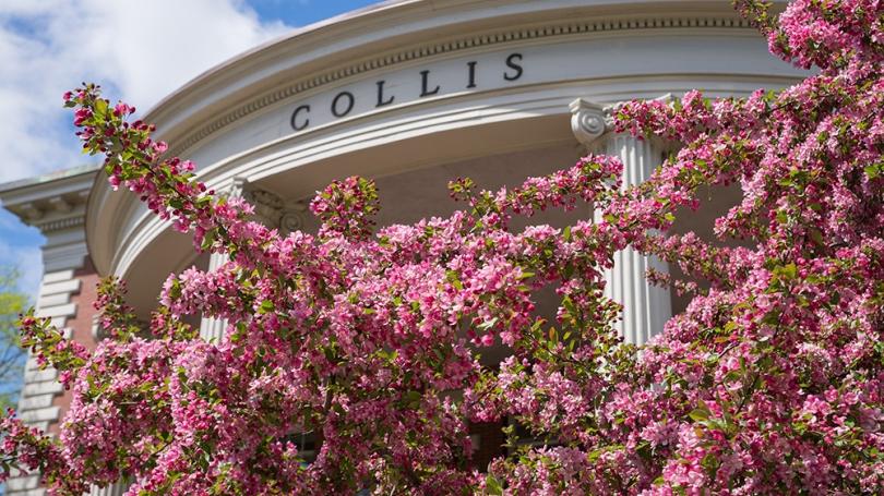 Collis spring