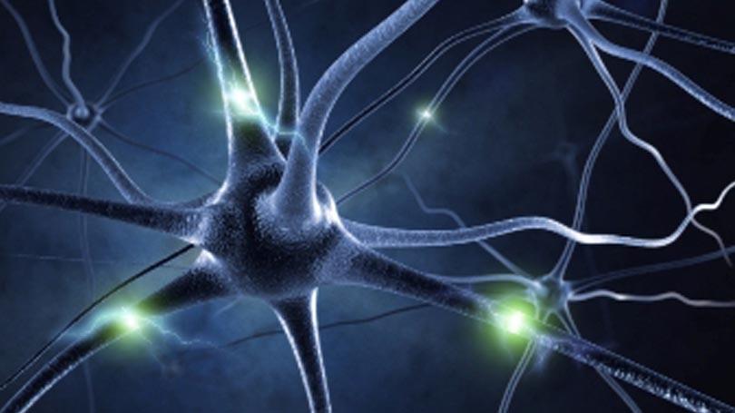 march 2017 Brain Buzz;how the brain works